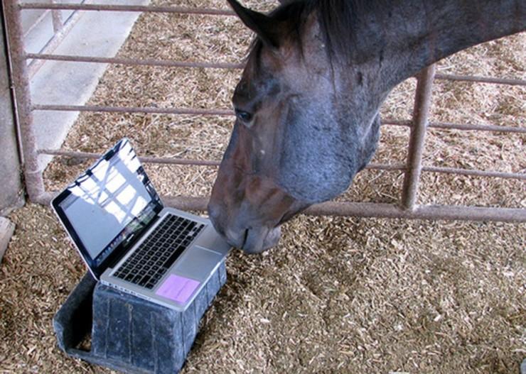 horse-computer2-900x642.jpg