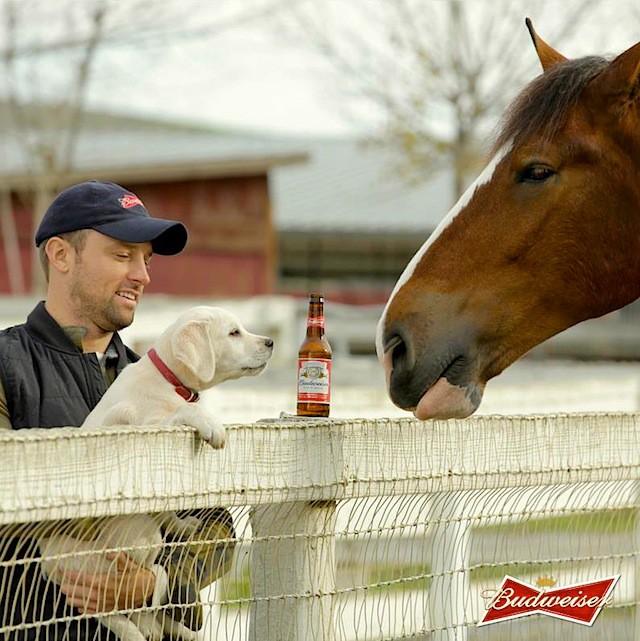 anuncio caballo 2