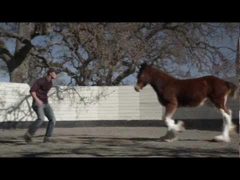 anuncio caballo
