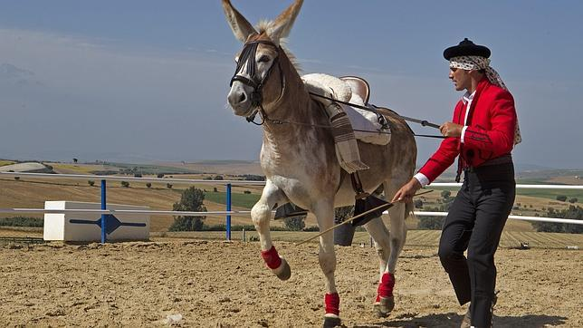 burro--644x362