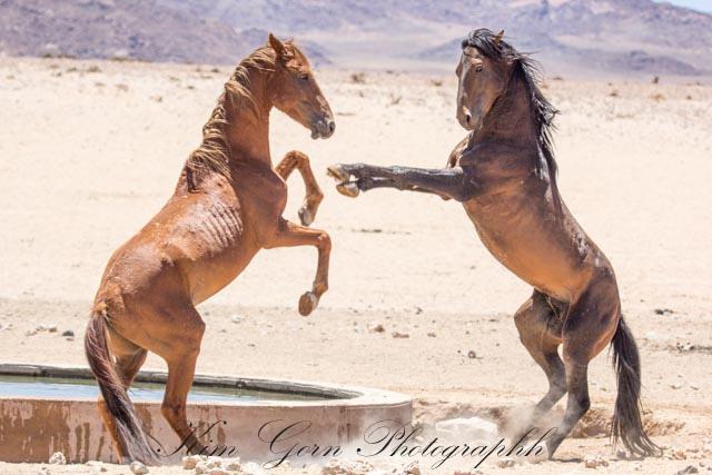 KG-6-8.02.15-Wild-Horses-353