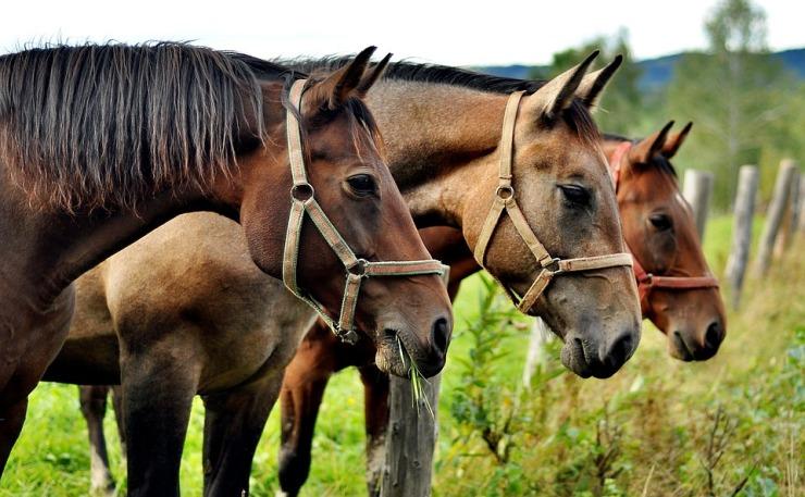 horses-2962718_960_720.jpg