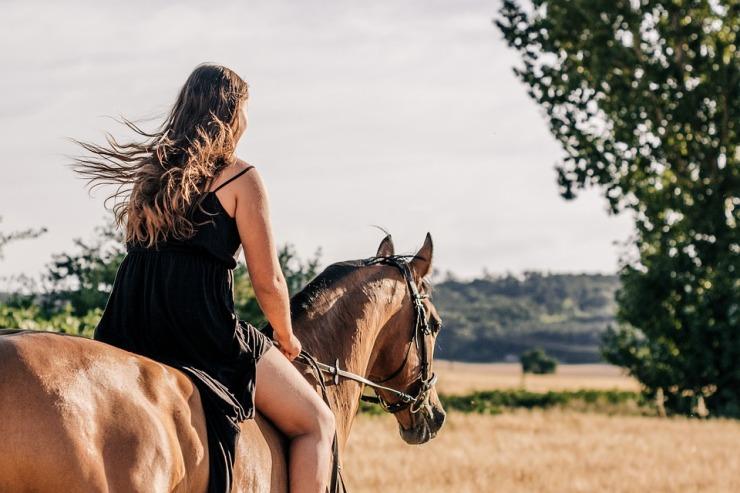 horse-3553269_960_720